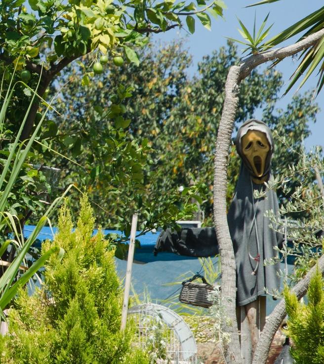 דחליל בחצר, עג'מי, רחוב אסף הרופא