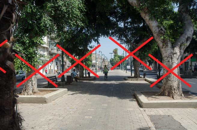 תחנת בן צבי - כאן מתכננים לעקור 5 עצים.