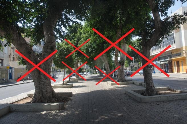 העצים שמתכננים לעקור בתחנת ארליך