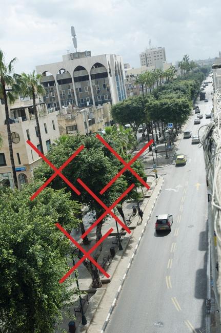 5 עצים נוספים שייעקרו בתחנת סלמה, שדרות ירושלים.